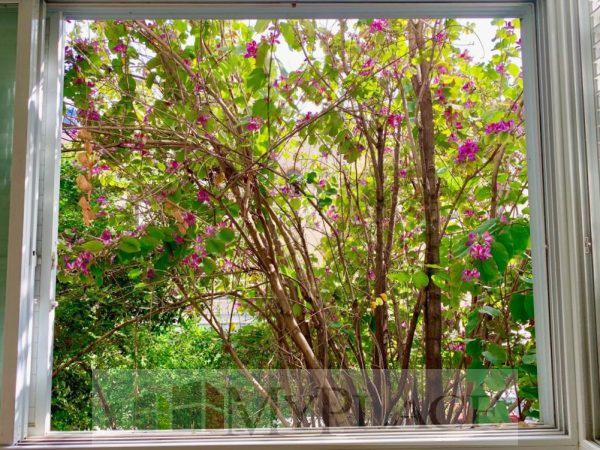ברחוב מאנה דירת 2 חדרים עם מרפסת לנוף ירוק 3