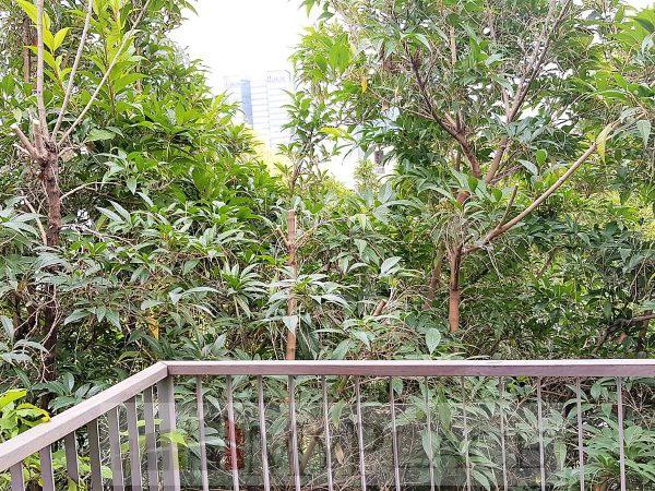 ברחוב שקט דירה משופצת עם מעלית ומרפסת לנוף ירוק 5
